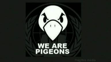 les pigeons entrepreneur